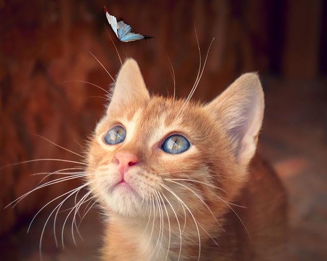 猫の都市伝説6選!猫好きなら知っている?不思議な都市伝説!