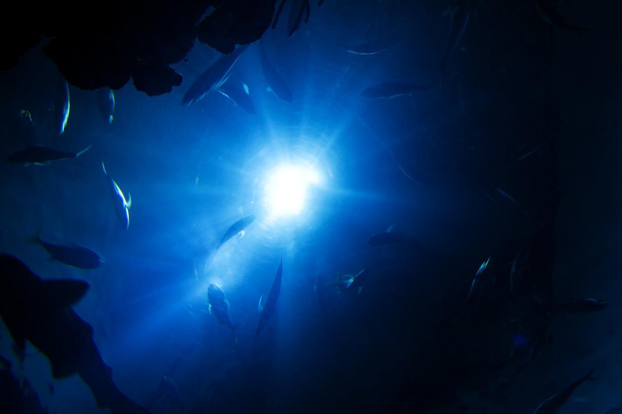 深海!海の底に生息する深海魚や未確認生物の謎